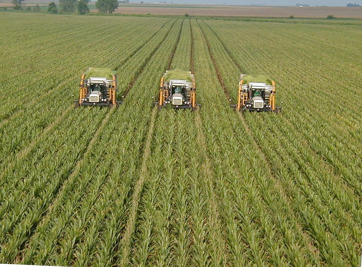 Wheat Green Revolution